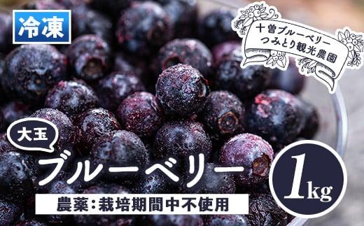 isa157 冷凍ブルーベリー(1kg) 【伊佐ブルーベリーつみとり観光農園】