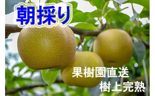 BQ-032 果樹園直送/朝採り/新田原産「なし」2.5kg