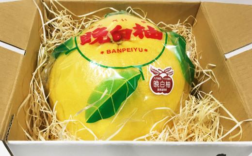 八代産 晩白柚 1玉 約1.4kg(くまモンの箱入り)
