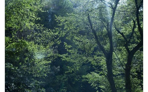 足羽山の木々