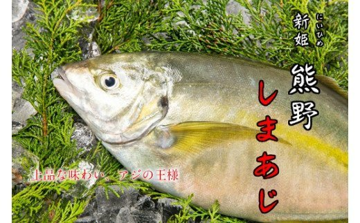 水谷水産 【新姫 熊野しまあじ】 下処理済み