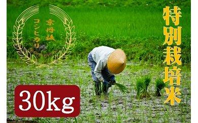 令和3年度産 特別栽培米京丹後コシヒカリ 30kg