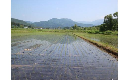 除草剤や消毒薬なを使用せず、黒い紙マルチで雑草と病気に対応します。