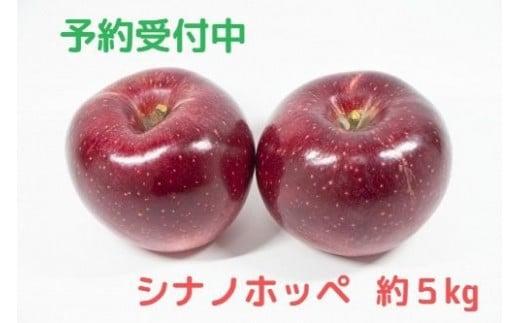 [0767]【先行予約】土屋農園のりんご【シナノホッペ】 秀~特秀 約5kg 長野県飯綱町産