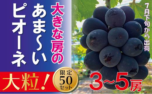 TT-2 岡山のあまーいピオーネ( 2kg3~5房)