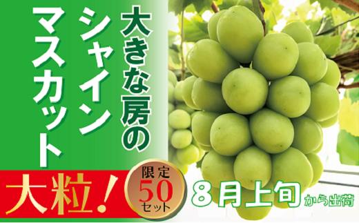 DD-56 岡山のあま~い「シャインマスカット」 1房(大房)