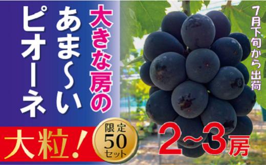 AC-1 岡山のあまーいピオーネ(1kg2~3房)