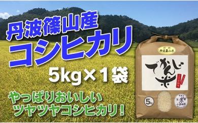 お米のおいしさ伝えたい!丹波篠山産コシヒカリ5kg×1