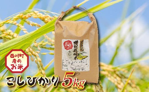FYN9-205【令和2年度産米】山形県西川町産 こしひかり 5kg
