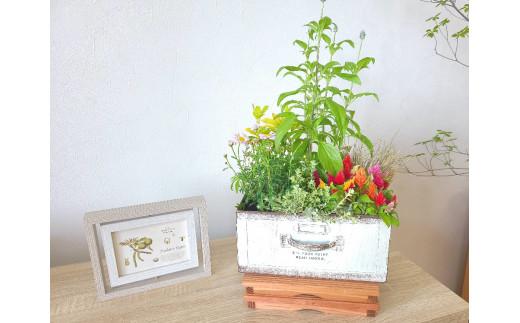 花屋が贈る季節の寄せ植え鉢