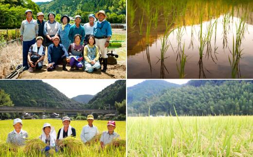 【定期便 3回】熊本県産 鶴喰米 つるばみまい 5kg お米 精米 白米