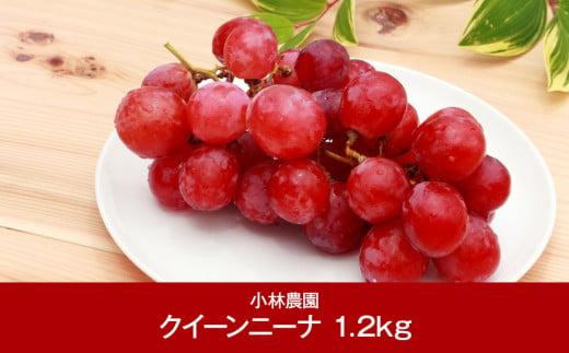 【013P028】[小林農園] 新潟フルーツ 新潟県産 ぶどう クイーンニーナ 1.2kg