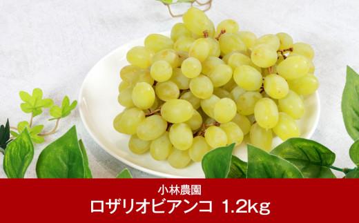 【011P005】[小林農園] 新潟フルーツ 新潟県産 ぶどう ロザリオビアンコ 1.2kg
