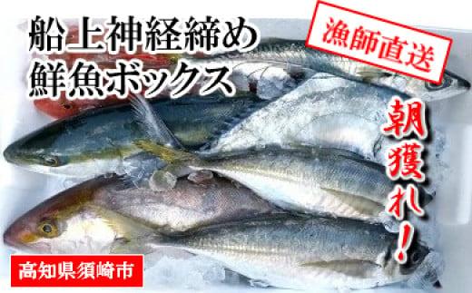朝獲れ直送 漁師が船上で神経締めするから鮮度が違う お楽しみ鮮魚ボックス