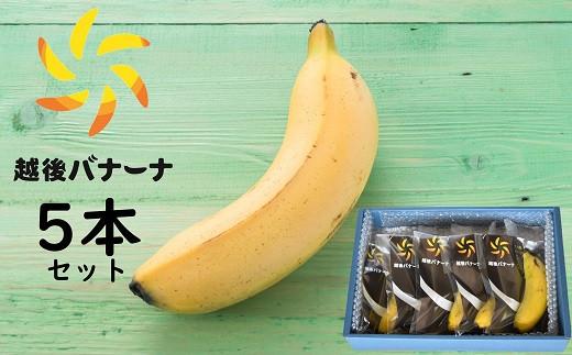 [F225]皮ごと食べられる!越後バナーナ 5本セット