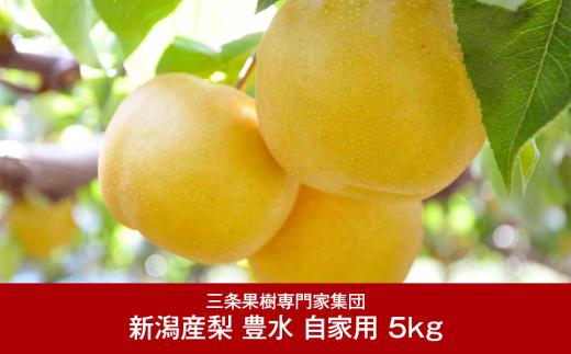 【010P055】[三条果樹専門家集団] 新潟フルーツ 新潟県産 和梨 豊水 自家用 5kg