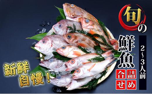 [№5685-2025]日本海の鮮魚詰め合わせ(2~3人前 下処理済み 切り身 魚介 セット)