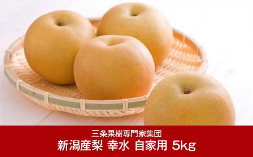 【010P047】[三条果樹専門家集団] 新潟フルーツ 新潟県産 和梨 幸水 自家用 5kg