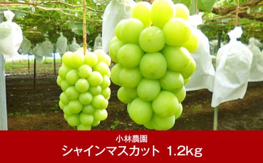 【013P027】[小林農園] 新潟フルーツ 新潟県産 ぶどう シャインマスカット 1.2kg