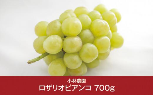 【010P051】[小林農園] 新潟フルーツ 新潟県産 ぶどう ロザリオビアンコ 700g