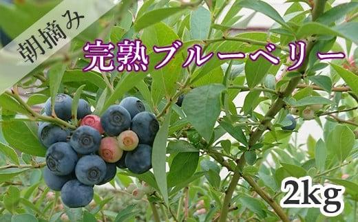 R-6 【先行予約】朝摘み完熟フレッシュブルーベリー2kg