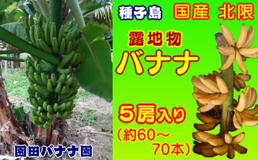 園田バナナ園 北限の露地バナナ 5房 600pt NFN251