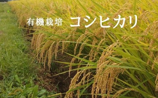 No.0642 令和2年産 新米 福島やまろく 有機栽培コシヒカリ 精米5kg