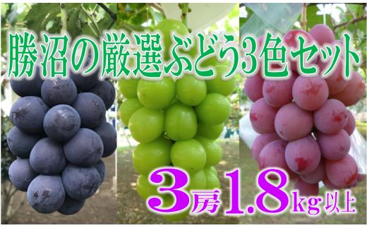 C-180.福寿園の朝どり直送 勝沼の厳選ぶどう3色セット 1,8kg以上