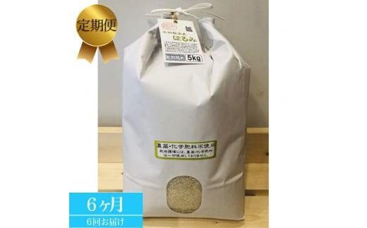【定期便 6ヶ月】志村屋 令和2年小田原市産 農薬・化学肥料不使用はるみ 新米 5kg
