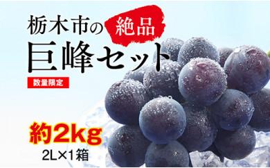 【2021年夏発送分先行受付 / 数量限定】栃木市の絶品巨峰セット