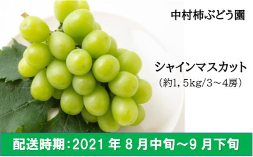 K153 中村柿ぶどう園 シャインマスカット 約1.5kg