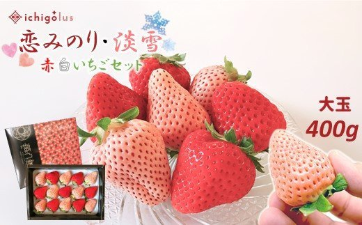 I4 イチゴラス 紅白いちごセット「恋みのり・淡雪」大玉400g ≪化粧箱入り≫