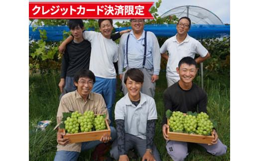 No.130 世羅町産 種無しシャインマスカット 4~5房入り / ぶどう 葡萄 広島県
