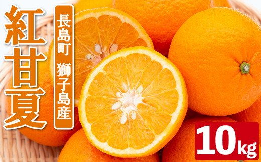 BLUE獅子島柑橘組合の紅甘夏_blue-411