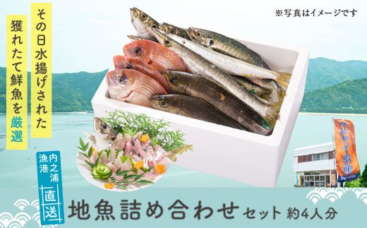 内之浦漁港直送(地魚は季節によって内容が変わります)