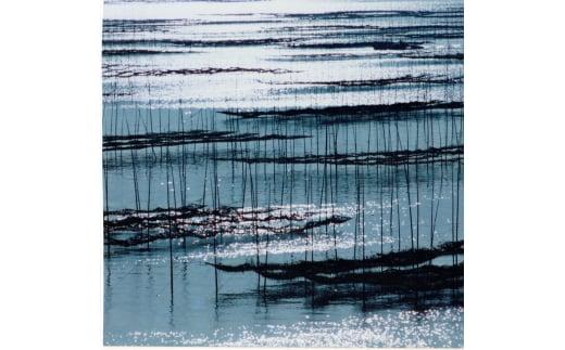 海苔の養殖風景