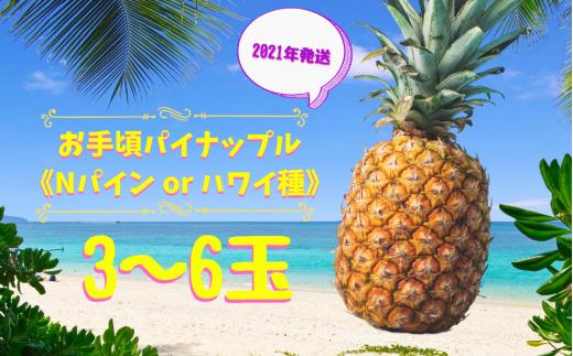 お手頃パイナップル《Nパイン or ハワイ種 3~6玉》【2021年8月発送】