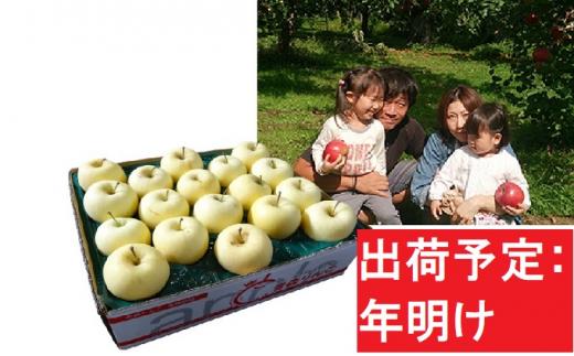 【訳あり】 りんご 青森産 約5kg 金星【1~2月発送】[№5898-0436]