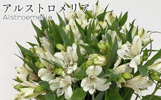 アルストロメリア1束(10本入り)〔ホワイト系〕