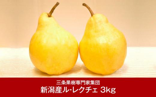 【016P026】[三条果樹専門家集団] JGAP認証農場 新潟県産 洋梨 ル・レクチェ 3kg