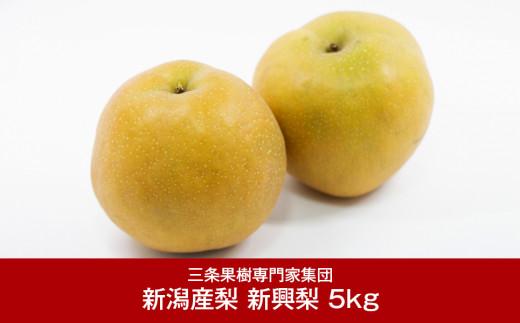 【016P031】[三条果樹専門家集団] 新潟フルーツ 新潟県産 和梨 新興梨 5kg