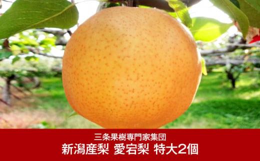【016P027】[三条果樹専門家集団] 新潟フルーツ 新潟県産 和梨 愛宕梨 特大2個