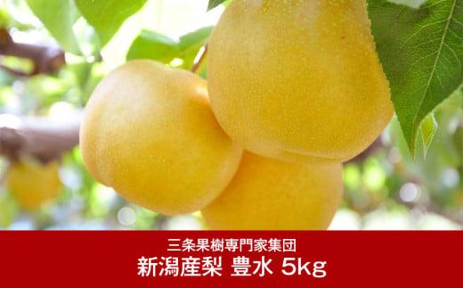 【016P020】[三条果樹専門家集団] 新潟フルーツ 新潟県産 和梨 豊水 5kg