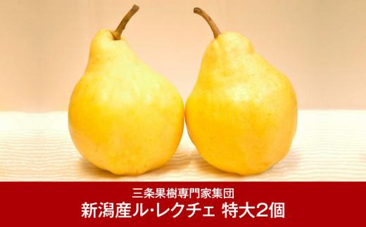 【016P029】[三条果樹専門家集団] JGAP認証農場 新潟県産 洋梨 特大 ル・レクチェ 2個