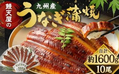 【丑の日配達指定】鰻天屋の九州産うなぎ 蒲焼 160g×10尾 計1.6kg セット(1尾約160g)