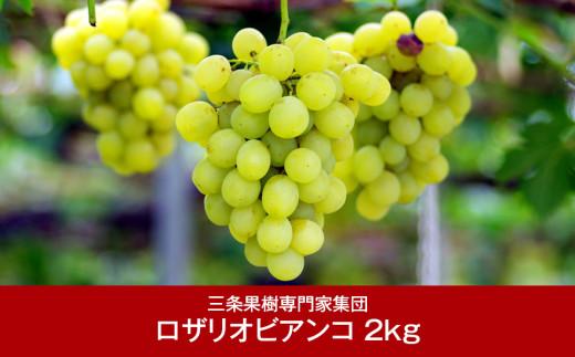 【016P038】[三条果樹専門家集団] 新潟フルーツ 新潟県産 ぶどう ロザリオ・ビアンコ 2kg