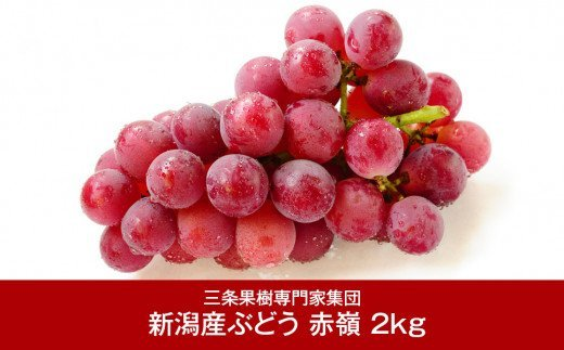 【017P016】[三条果樹専門家集団] 新潟フルーツ 新潟県産 ぶどう 赤嶺(セキレイ) 2kg