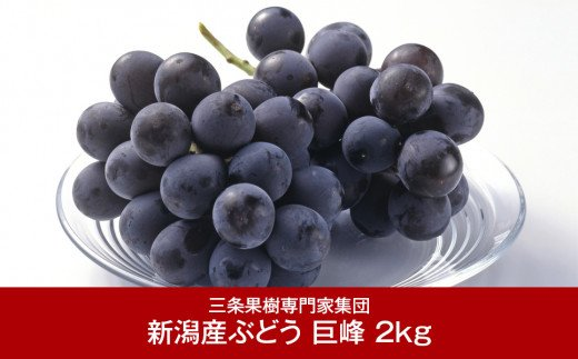 【016P033】[三条果樹専門家集団] 巨峰