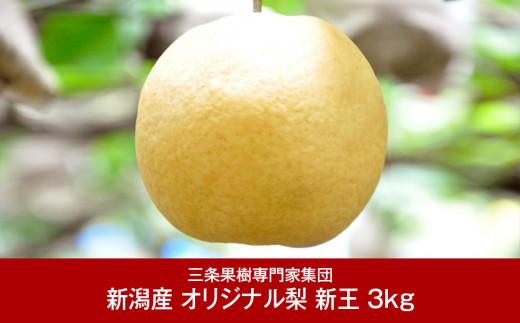 【016P041】[三条果樹専門家集団] 新潟フルーツ 新潟県産 オリジナル和梨 新王 3kg