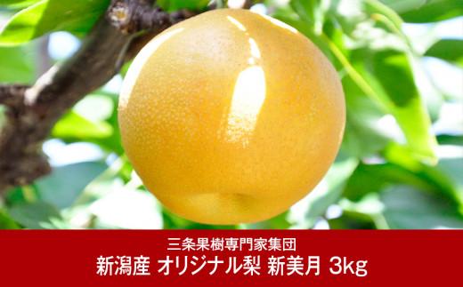 【016P037】[三条果樹専門家集団] 新潟フルーツ 新潟県産 オリジナル和梨 新美月 3kg